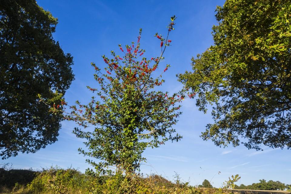 berry_automne_rando_outdoor__53