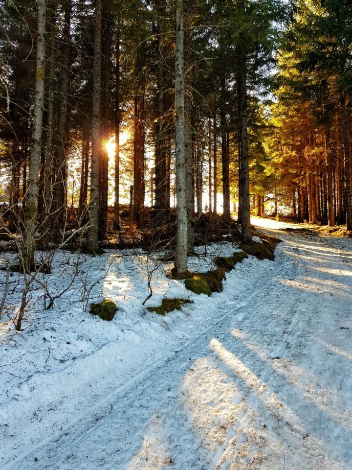 foret auvergne hiver